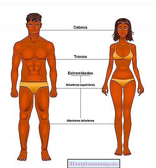 Human body parts - Science